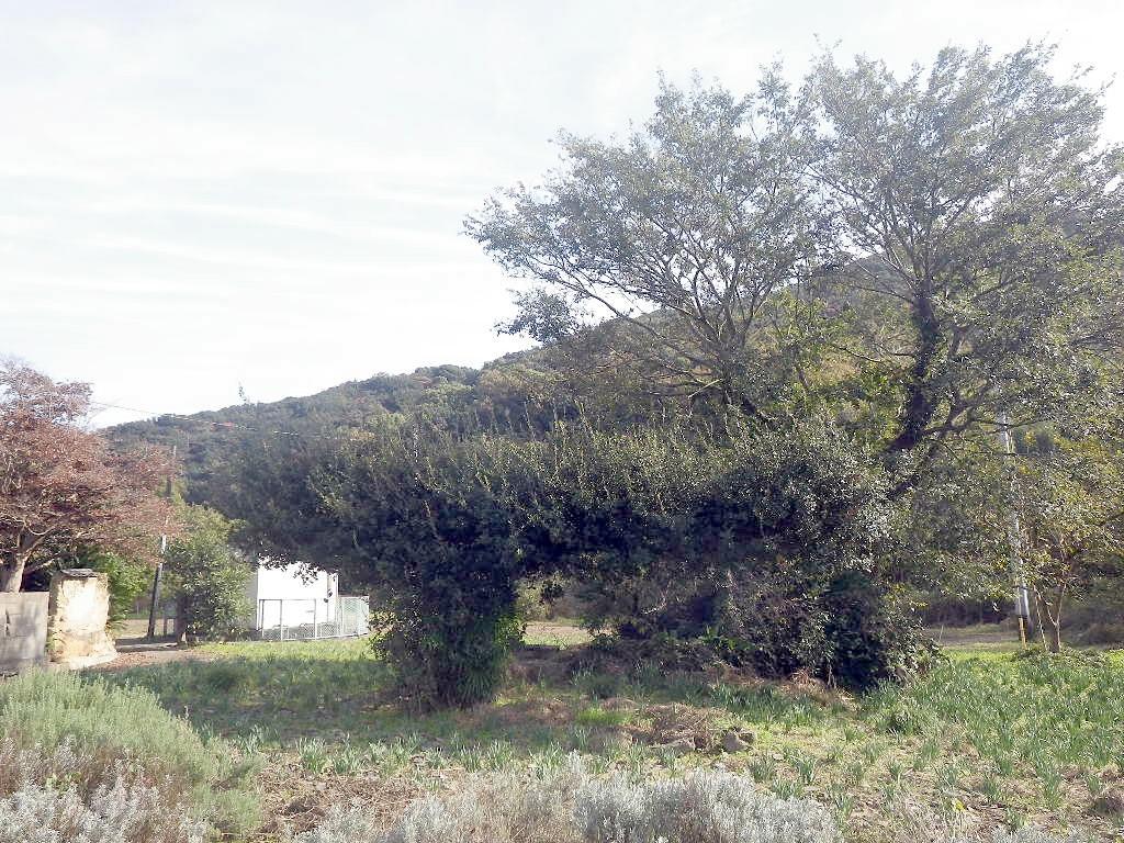 変わった形のバベの木