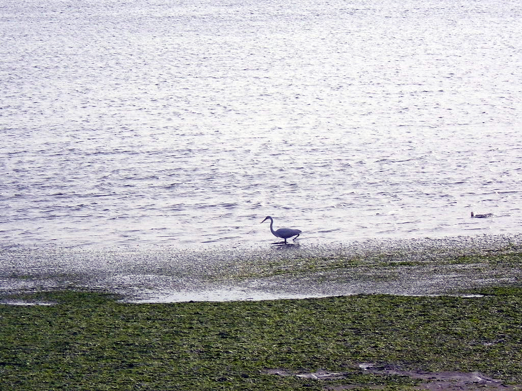 江の浦海水浴場
