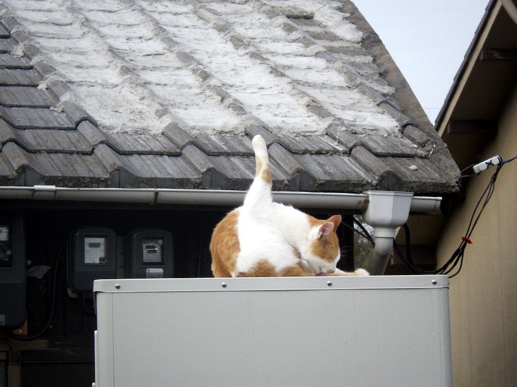 ビストロ伊織のネコ